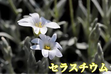 4/25今日は何の日?